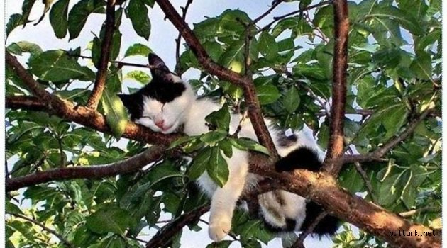 Ağaçta Uyuma Sanatı