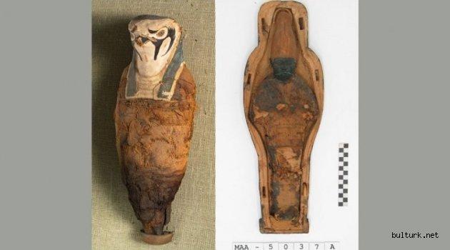 Küçük Eski Mısır Mumyaları İçinde Sürprizler Var… Ve İnsan Değiller