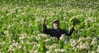 Bulgaristan'da yardım olmazsa tütün üretimi olmaz