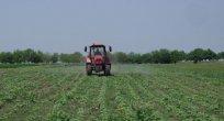 Bulgaristan'da tarım alanlarına doğal olaylara karşı sigorta