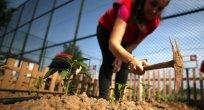 Yerli tohumda Cumhuriyet tarihinin en kapsamlı seferberliği başlıyor